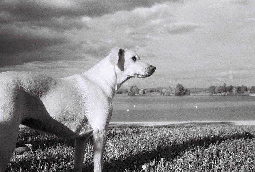 #epic #dog #trip35 #sfx200 #ilford #filmisnotdead
