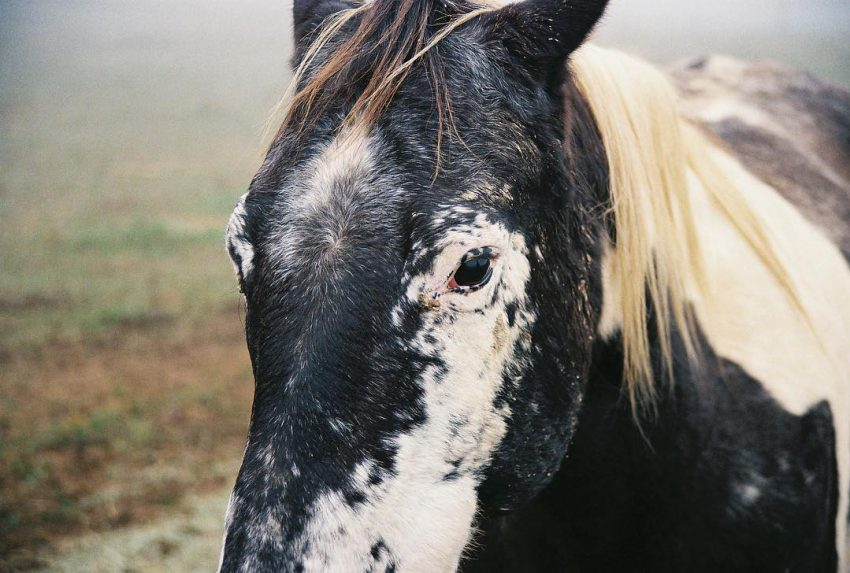 #horse #35mm #analog #filmphotographic #filmisnotdead #animalportrait