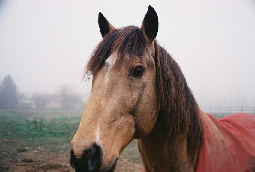 #horse #animalportrait #filmisnotdead #filmphotographic #analog #35mm
