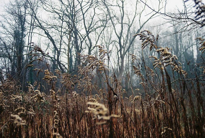 Winter nature  #35mm #analog #filmphotographic #filmisnotdead #nature