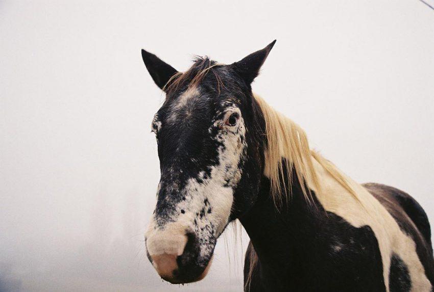 ALO UI SAY CHWAL #horse #animal #portrait #nature #filmisnotdead #filmphotographic #analog #35mm