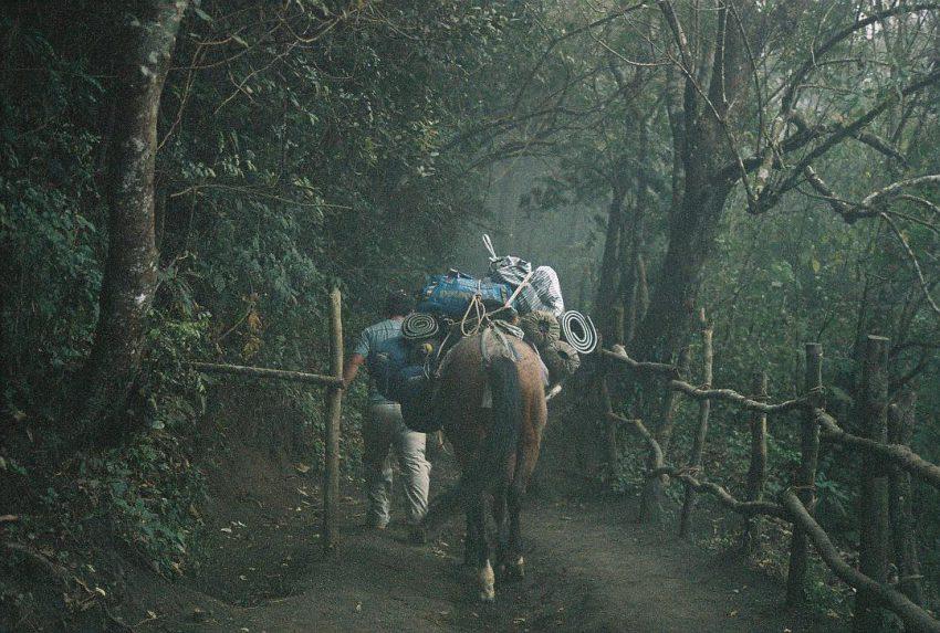 Hiking the Pacaya