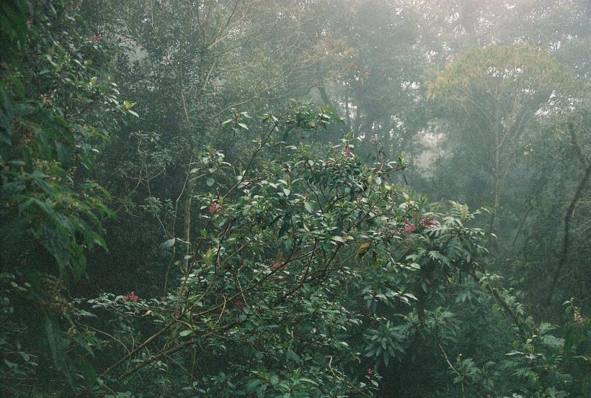 Humid forest of Pacaya