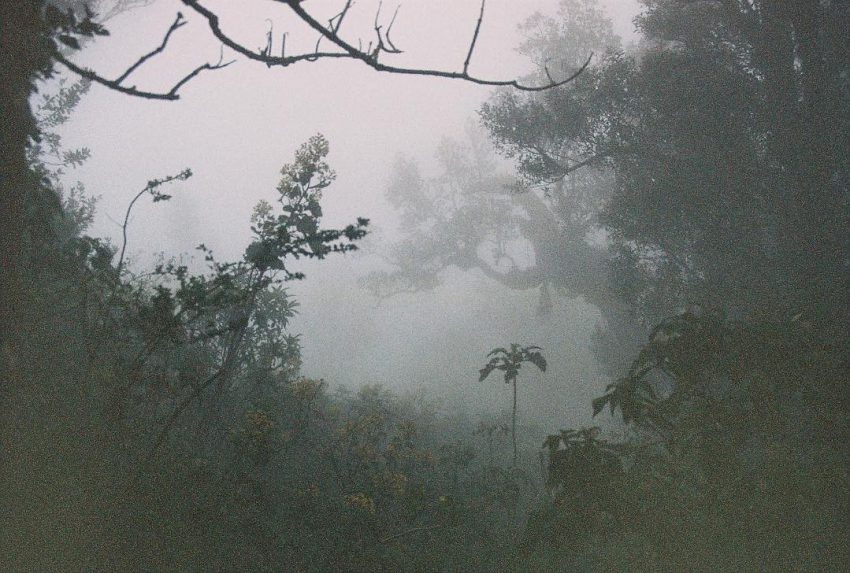 Foggy sight in the humid forest of Pacaya