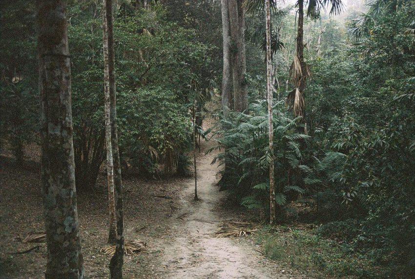 Neat and tidy jungle