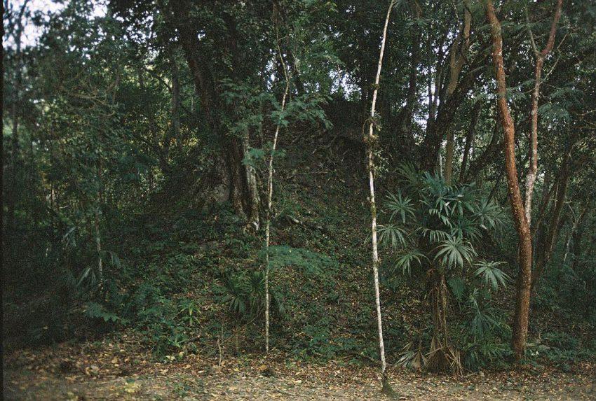 Tidy Jungle of Tikal