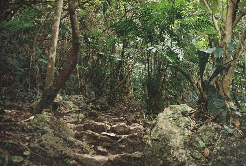 Still following the path in the jungle