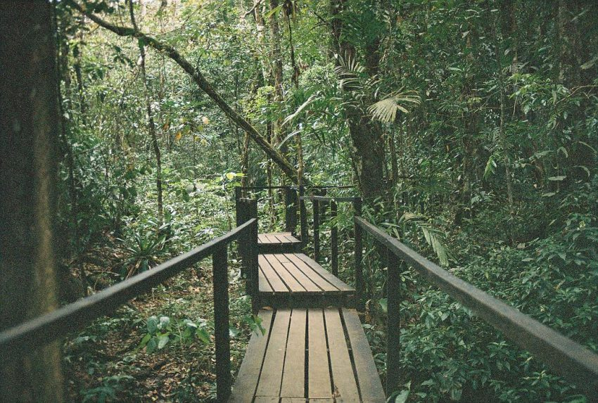 Wooden path in the jungle